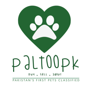 Pets Classified Pakistan