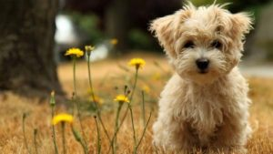 buy and sell pets online